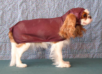 Show Down dog custom made apparel Torri in a bath coats drying coats